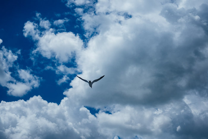 Beautiful cloud photography of a bird flying through blue skies