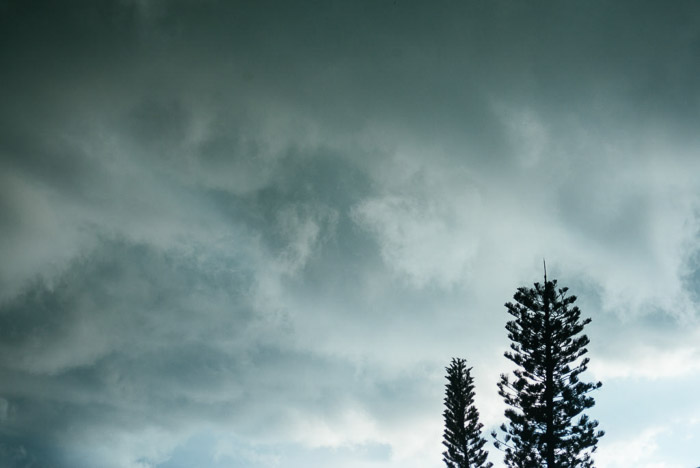 The silhouette of two trees against a stormy sky