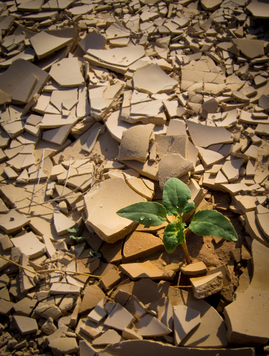 A green plant growing through broken concrete and rubble demonstrating conceptual contrast images