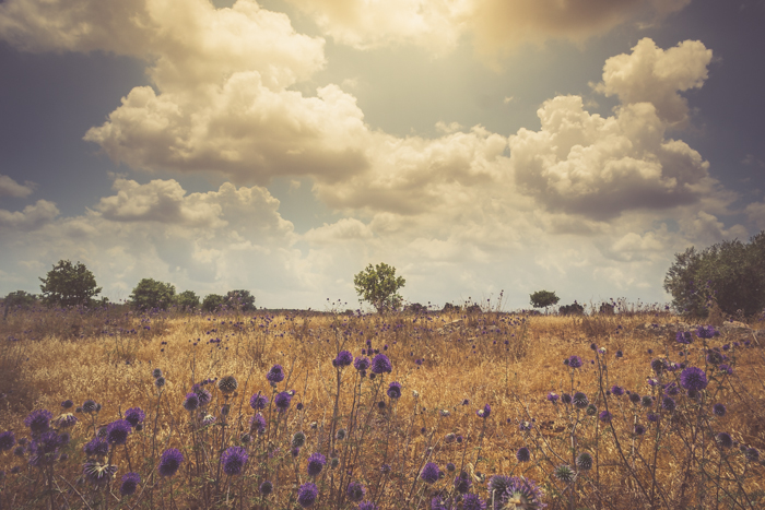 A dreamy low contrast photo of a meadow under a cloudy sky