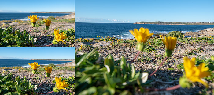 A grid of flower photos, example of using focus photography bracketing