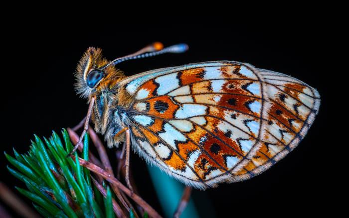 Beautiful macro photo of a butterfly shot with a crop sensor camera