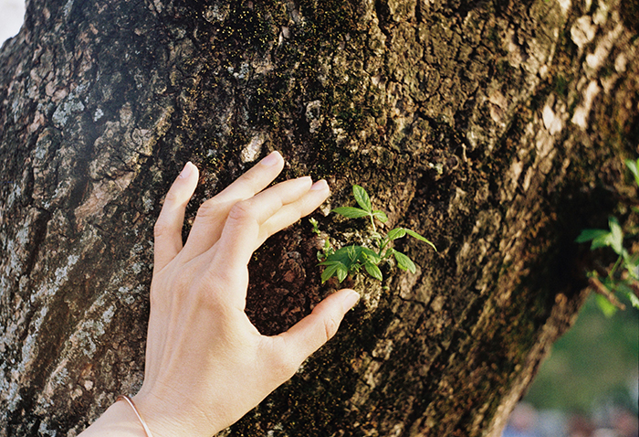 A persons hand rubbing a rough tree bark - texture photography tips