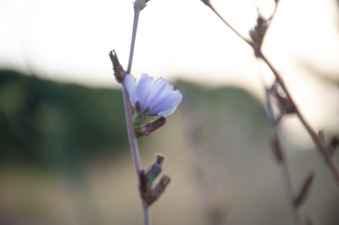 A blurry photo of a purple flower
