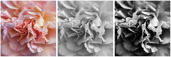 Black And White Fine Art Photography grid showing the conversion of an image of a rose to black and white. Color version (left). Black and white adjustment layer applied in Photoshop (center). Finished image (right).