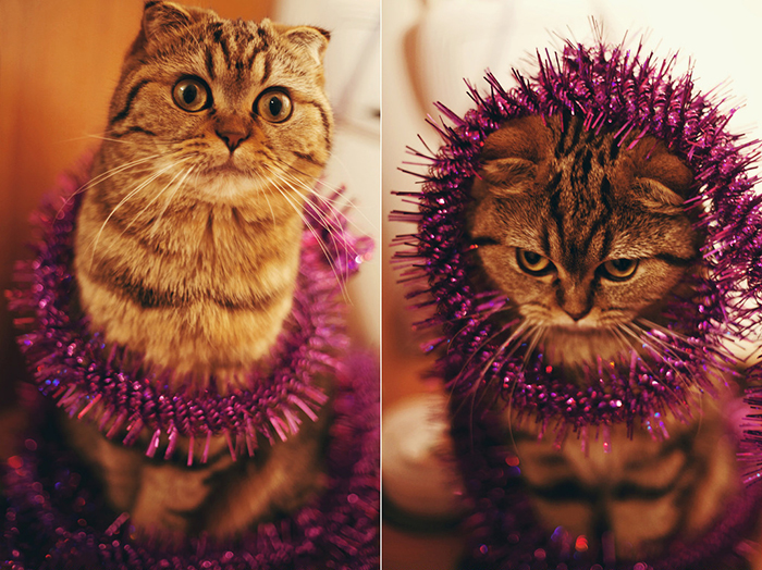 Cute diptych photography of a cat wrapped in christmas tinsel