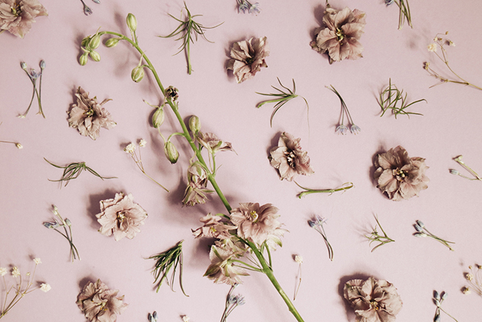 A flat lay of dried pink flowers on pink background used as diy photography backdrops