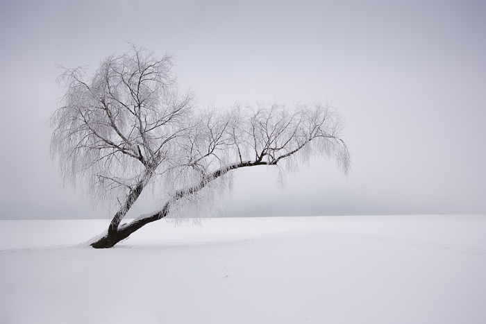 A snowy landscape with a tree, how to price photography prints
