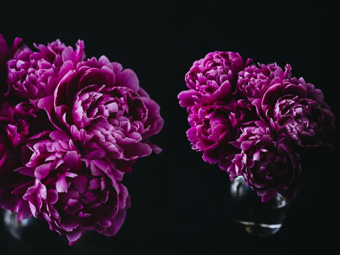 Dark and moody floral photography prints to sell online