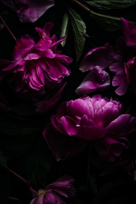 Dark and moody photo of purple flowers