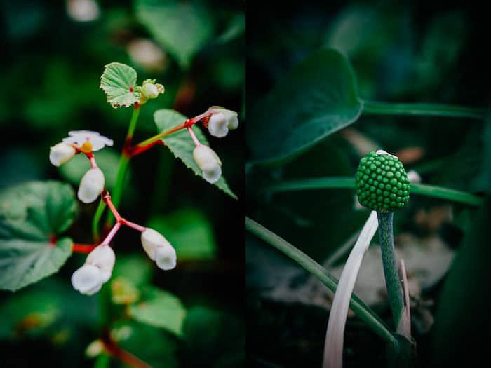 A botanical photo diptych