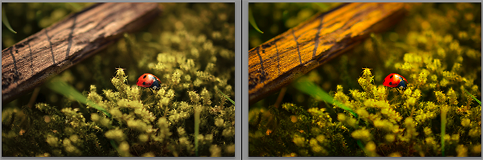 Diptych showing what is saturation and how it effects macro photography