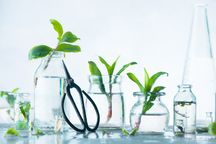 Bright and airy photo of plants in glass jars