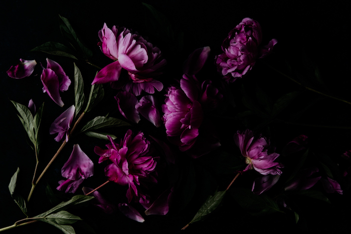 overhead shot of pink peonies - dark and moody flower photography