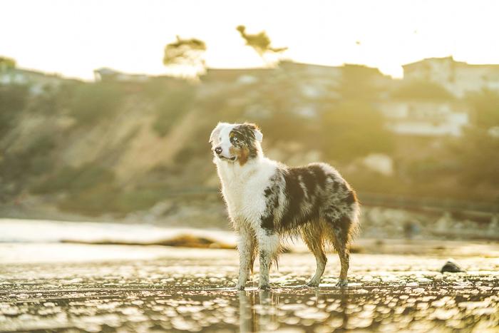 A dog portrait on a beach shot with a Sony a7R III mirrorless camera