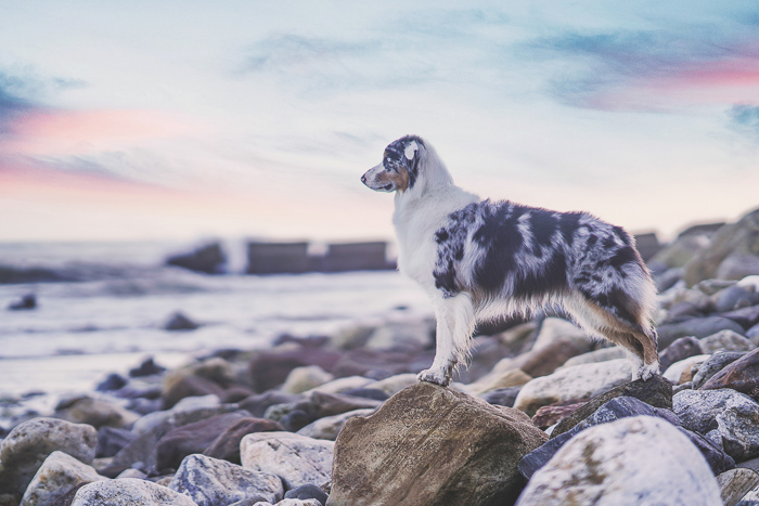 Dreamy pet portrait of a dog standing on a beach, shot with a Sony a7R III mirrorless camera