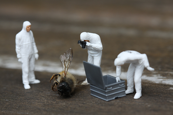 Toy action figures posed photographing a dead wasp