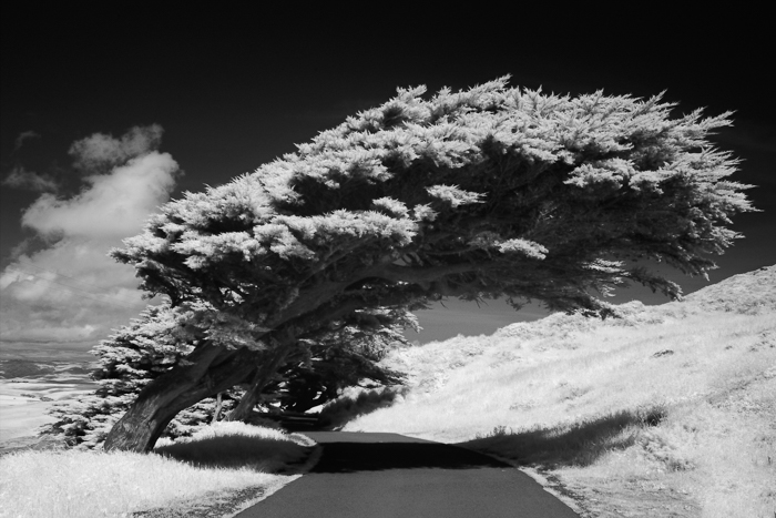A stunning shot of a large tree bending over a motorway - choosing the best black and white film