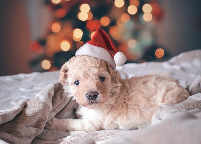 Um retrato de cachorro fofo com fundo de luzes bokeh