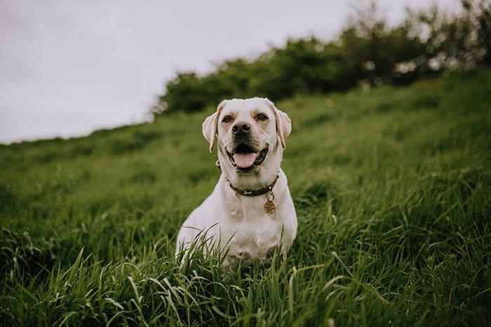 An outdoor dog photography portrait on an overcast day