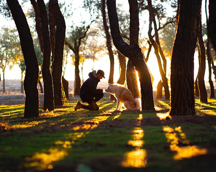 Uma foto sincera do dono de um cachorro e um cachorro em uma floresta