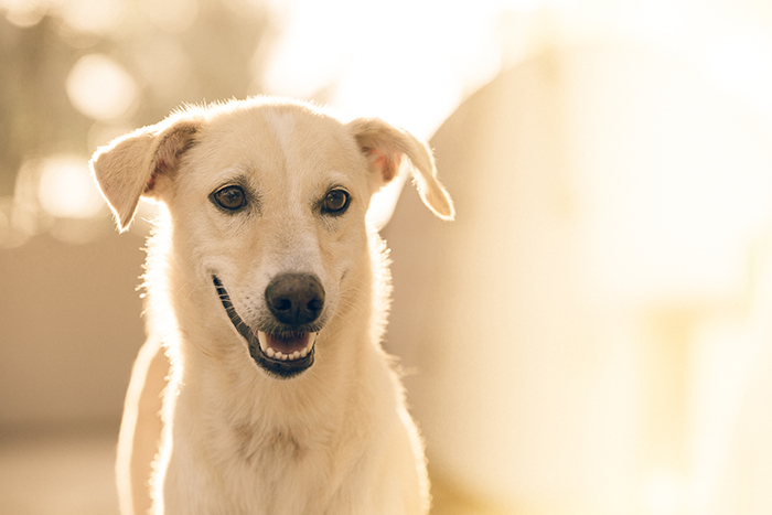 A pet photography portrait of a white dog