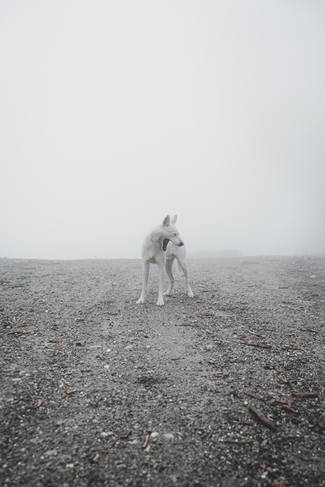 A fine art photography shot of a white dog - what makes photography art