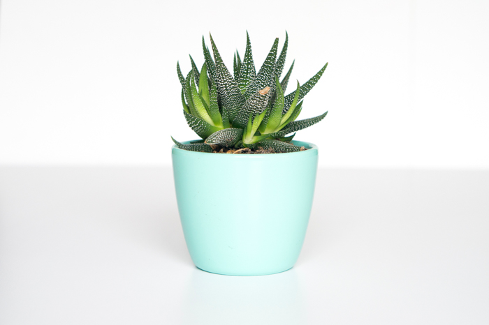 A product photography shot of a plant in a teal flower pot - ring flash photography