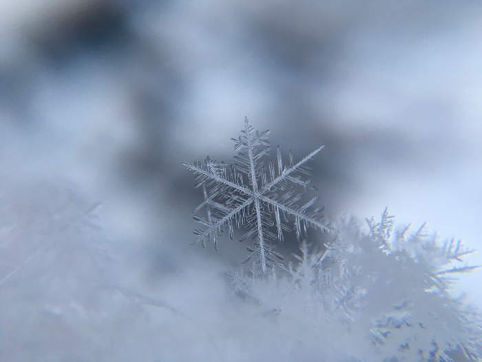 Close up snowflake photography