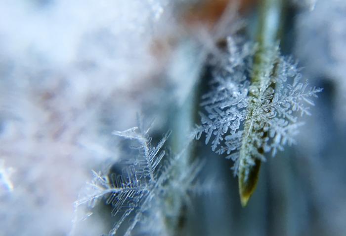 Macro photo of snowflakes on grass
