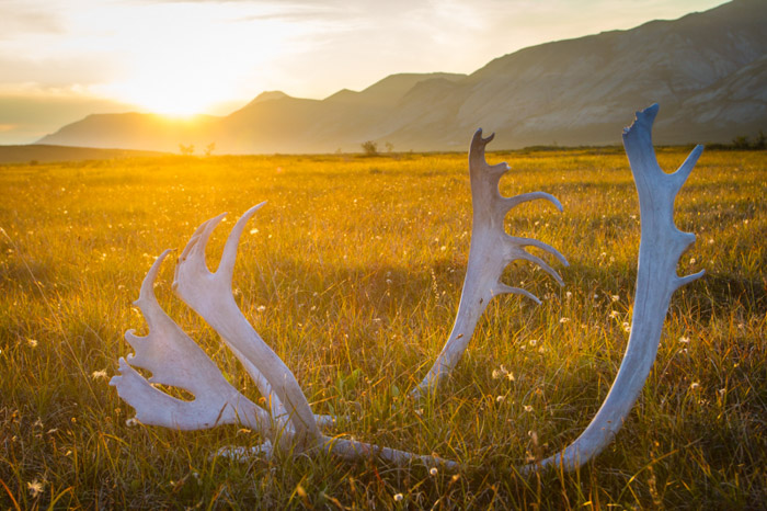Autumn landscape shot of deer antlers in a meadow