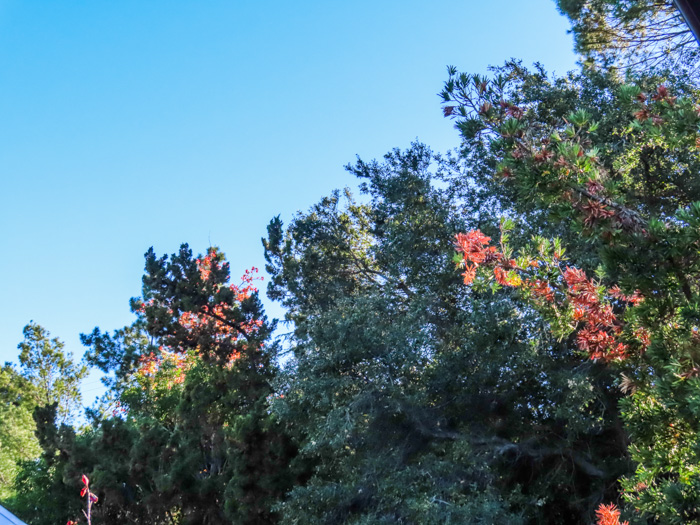 An outdoor shot of different types of trees, taken with canon powershot sx740 hs