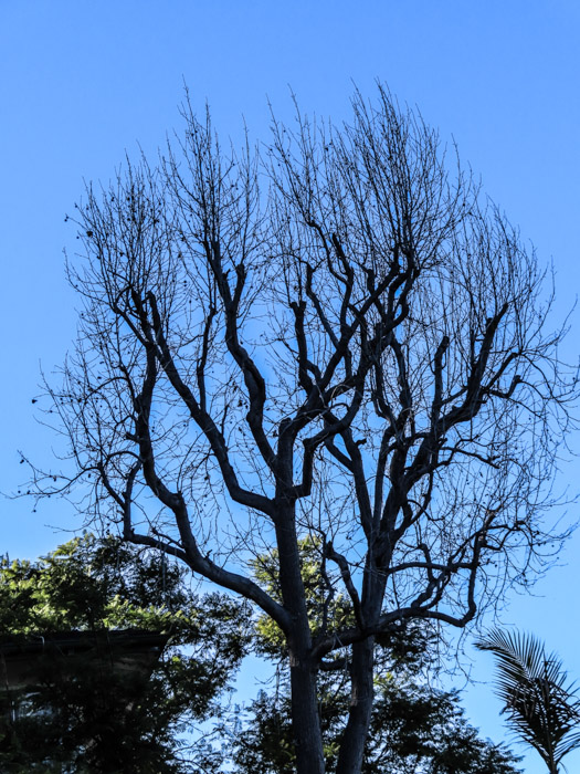 An outdoor shot of a large tree, taken with canon powershot sx740 hs