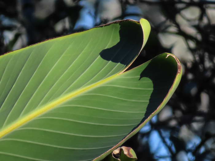 An outdoor shot of leaves, taken with canon powershot sx740 hs