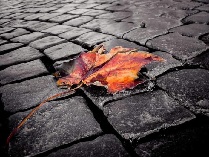 Una mezcla de blanco y negro con ejemplo de fotografía en color en una imagen de una hoja de naranja sobre un pavimento monocromo
