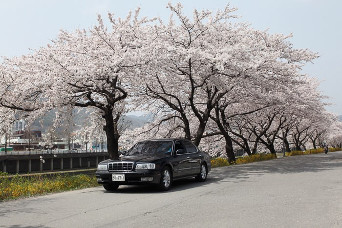A black car driving by a row of cherry blossom trees