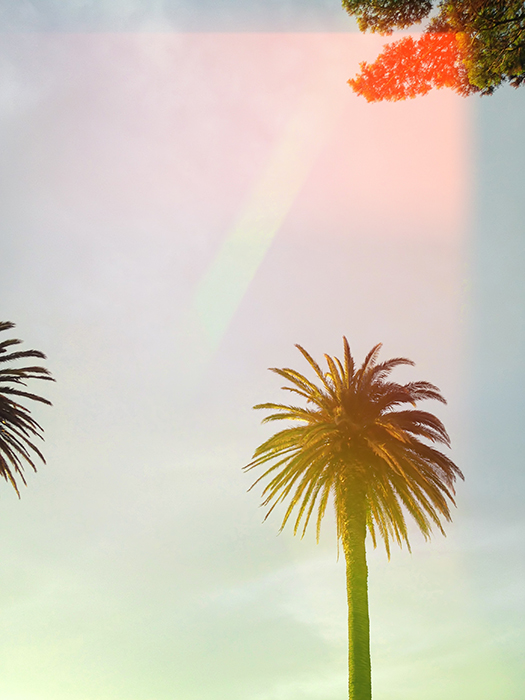 Filmic photography style photo of a palm tree with light leaks
