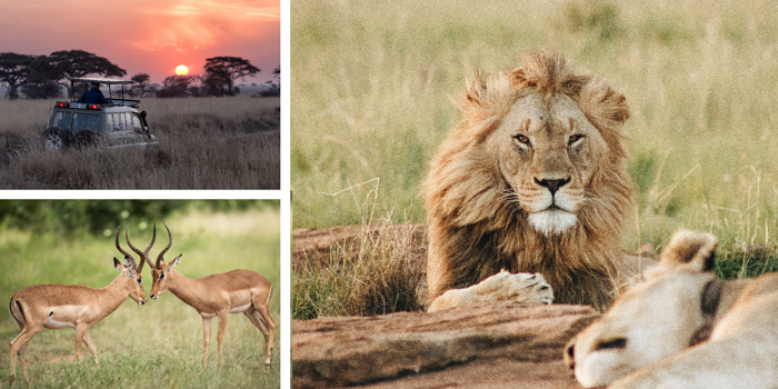 A wildlife photography montage created with cool free photoshop templates