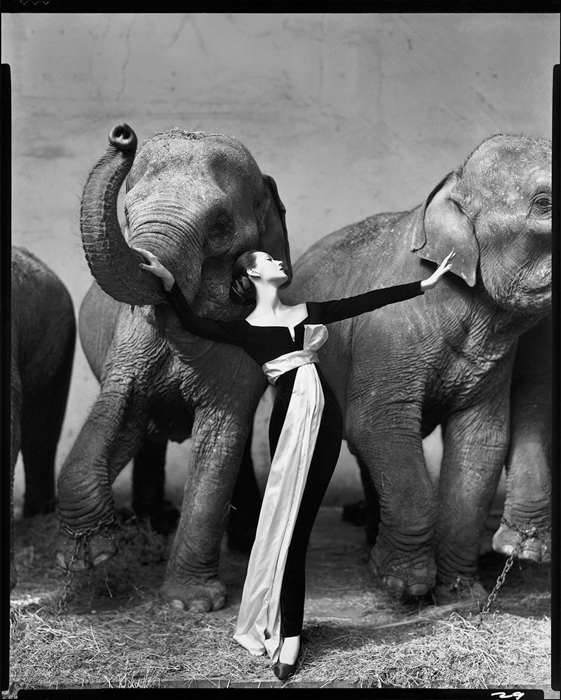 Dovima With Elephants, Evening Dress by Dior, Cirque d'Hiver, Paris , famous photography by Richard Avedon