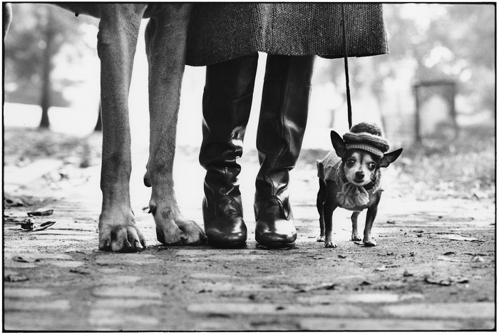 New York City - Elliott Erwitt , iconic images