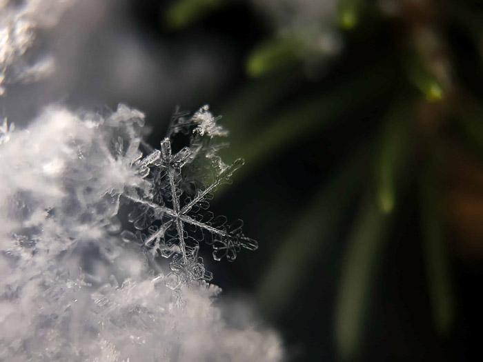 Beautiful macro snowflake photography