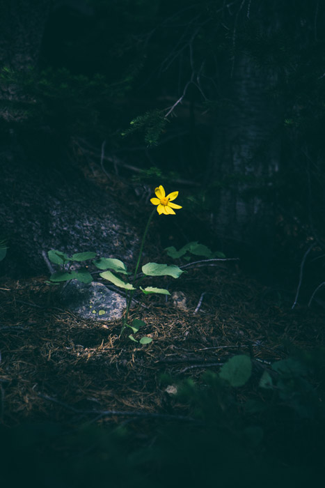 A small yellow flower in a dark forest - using the principles of art and design in photography