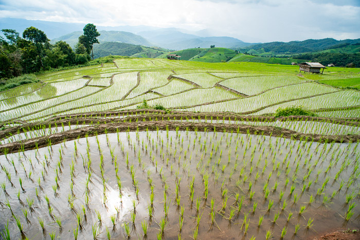 Aerial shot of Rice Farming in Thailand shot using hyperfocal distance photography