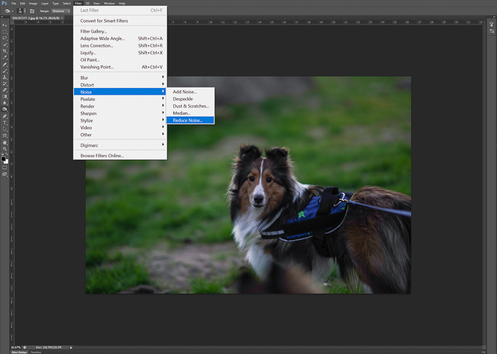 Editing a pet portrait of a brown dog in adobe Photoshop - night photography tips