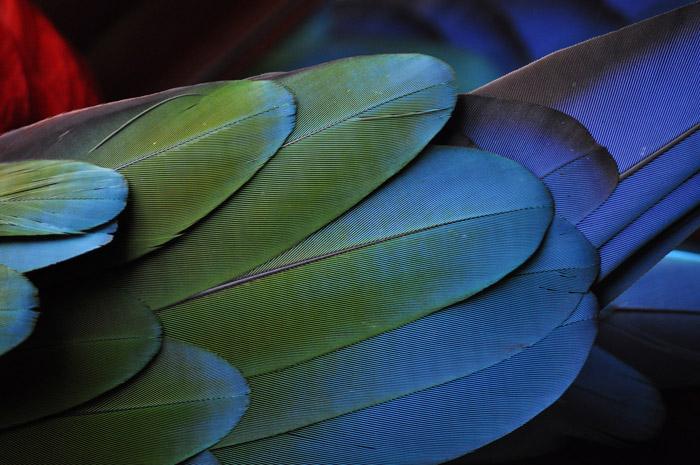 Una foto de cerca de coloridas plumas de aves - fotos abstractas