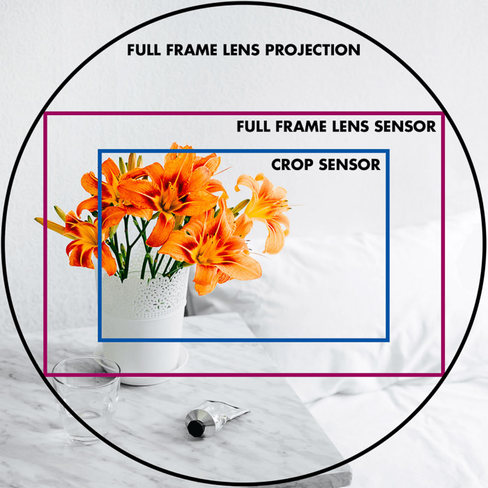 Orange flowers in a vase, with grids overlayed to indicate full frame lens projection, full frame lens sensor and crop sensor - equivalence in photography