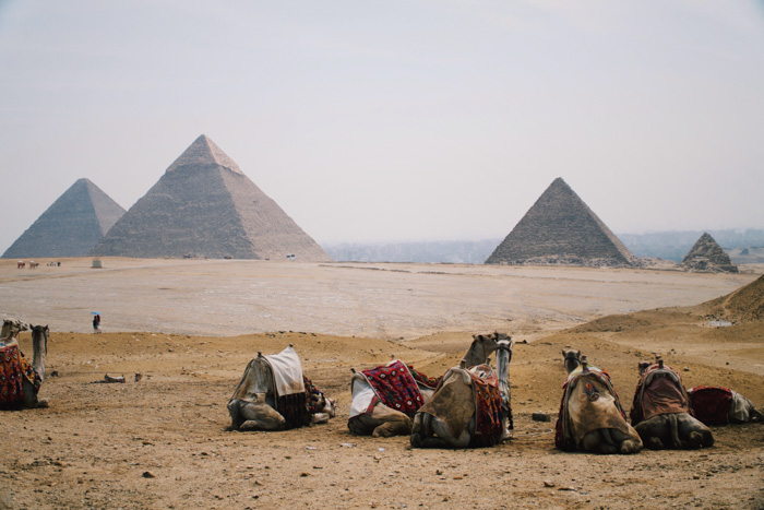 Camels resting in from of egyptian pyramids - iconic locations for photography