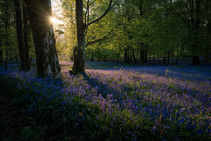 A carpet of purple flowers in a forest, sunlight peeping through the trees - best photography assignments
