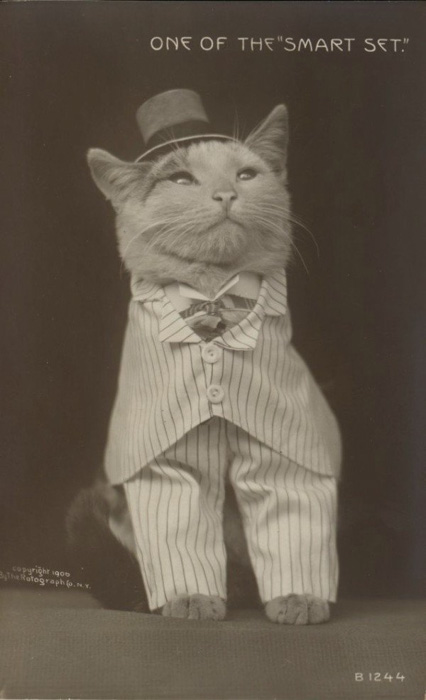 A strange old black and white photograpph of a cat dressed in formal wear
