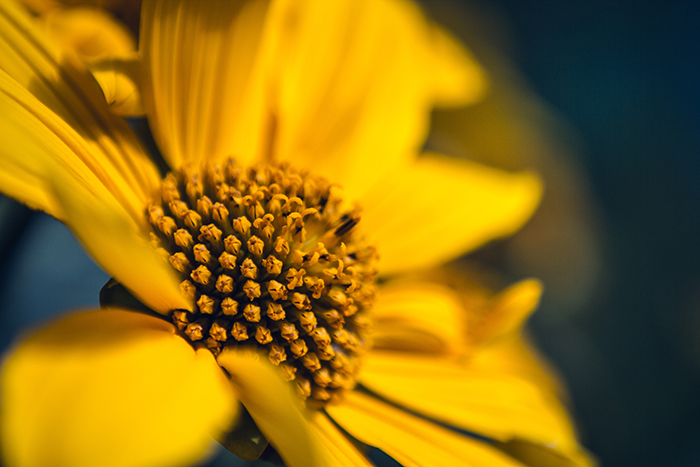 A macro photo of a yellow flower